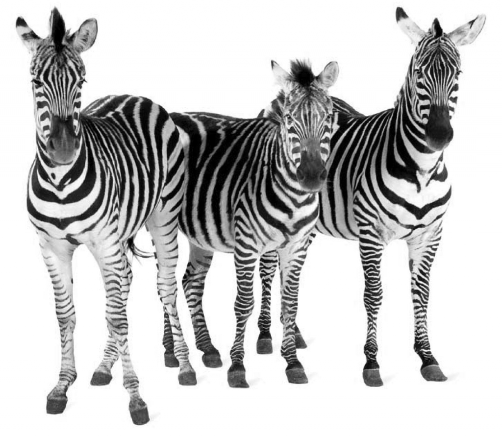 corporate_blogs_zebras
